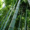 bamboo Charcoal Air Purifying Bag